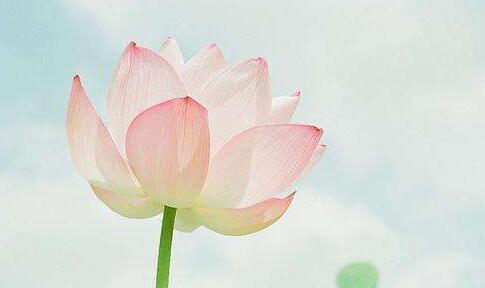 关于花的名人名言 赞美花朵的名句大全