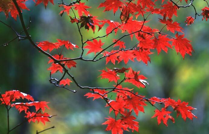 秋雨心烦的句子 写秋雨的唯美句子
