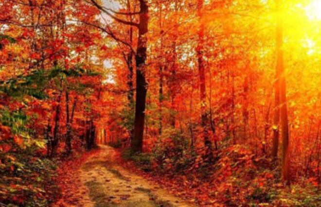 关于秋天古风句子秋天的文艺句子