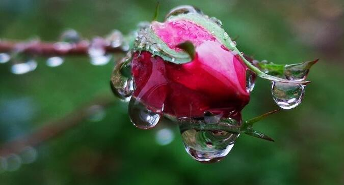 写春雨的优美句子 关于春雨的优美句子