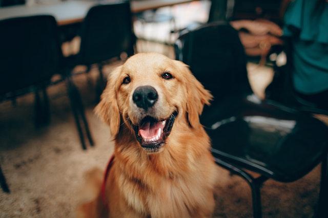 赞美狗狗的优美句子 主人表达爱狗狗的句子