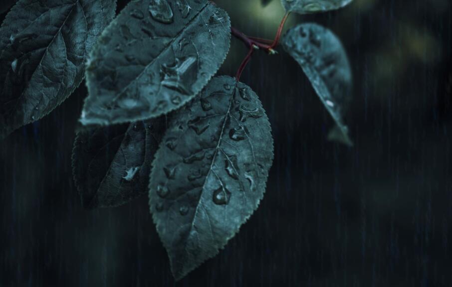 雨天心痛的句子 雨天想念的心痛句子