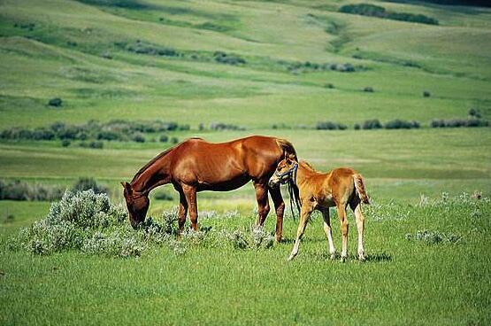 描写马的优美句子 赞美马的优美句子
