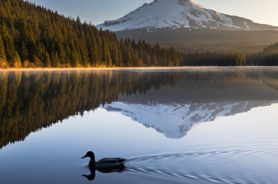 享受心静的生活的句子 静心生活的唯美语录