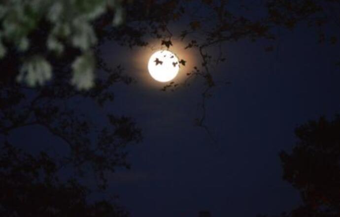 望月想家的句子 思乡之情的优美句子