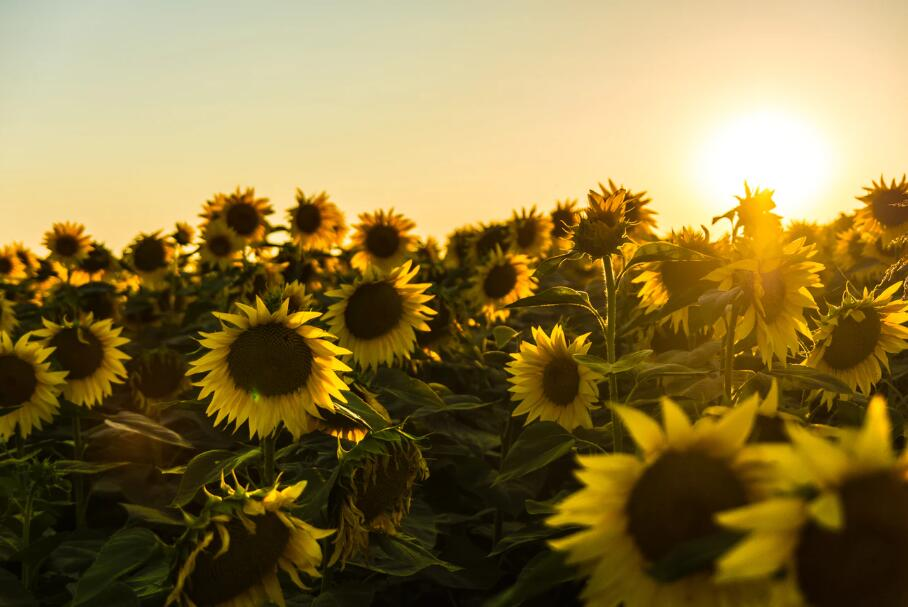 阳光心态的正能量句子 乐观心态的正能量语录