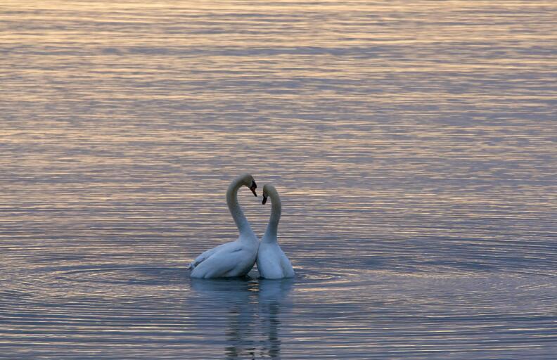 关于爱情的文艺唯美句子 爱情小清新唯美语录