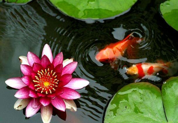 关于鱼的哲理的句子 与鱼有关的励志诗句