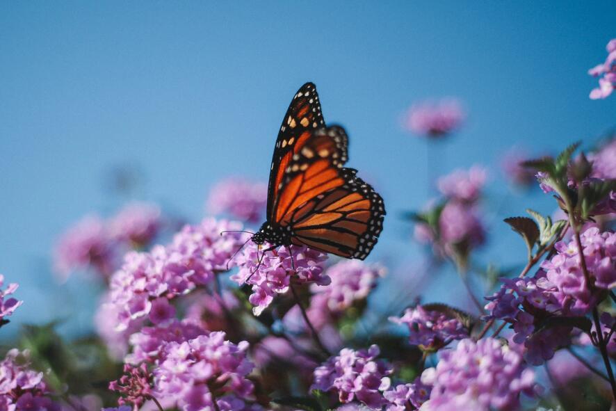 关于蝴蝶的唯美句子 赞美蝴蝶的唯美语录