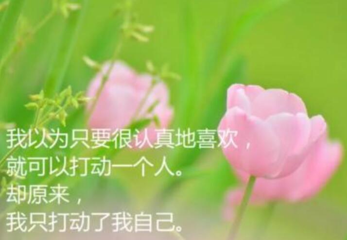 爱情伤感有哲理的句子