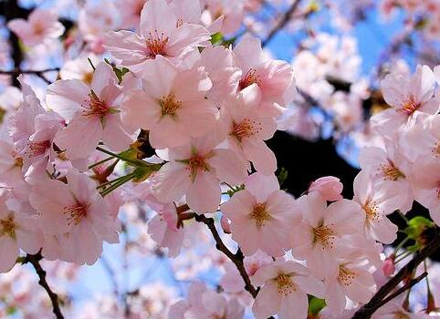 春天天气好的唯美句子大全