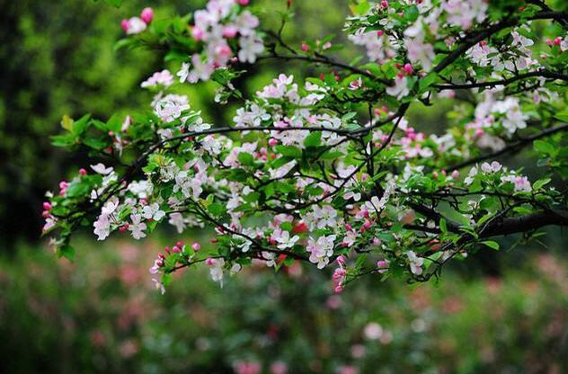 关于春天的优美句子 描写春天到来的优美句子