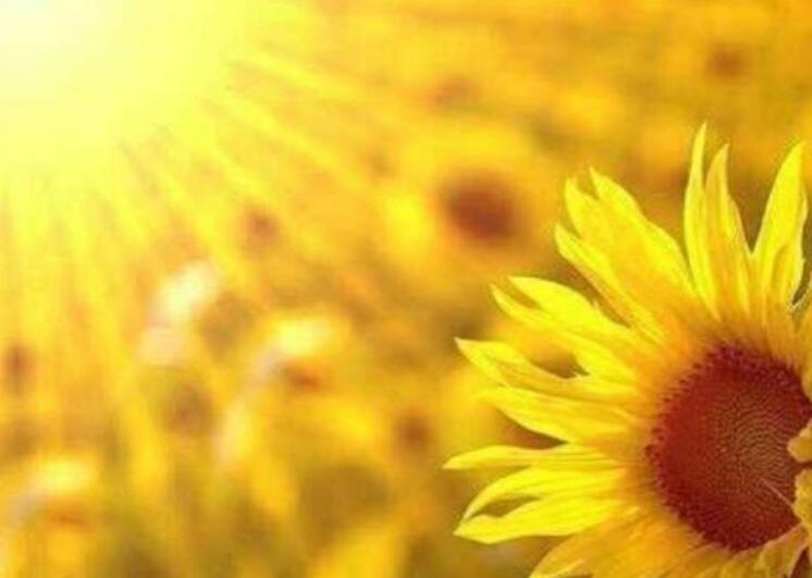 积极阳光正能量的句子 积极乐观心态正能量语录