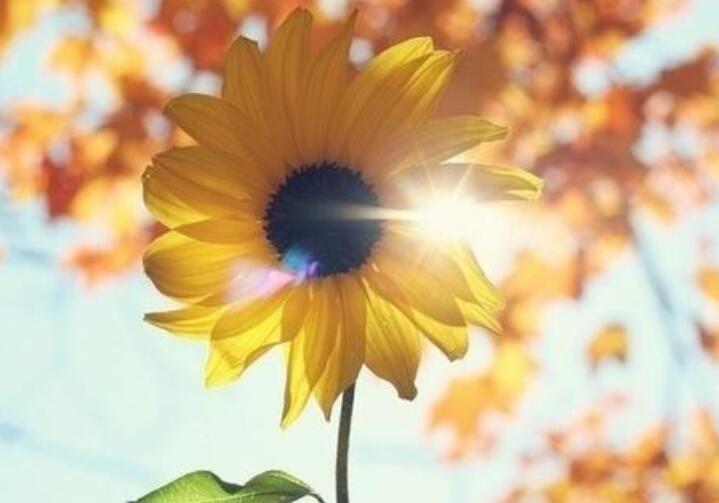阳光唯美的句子
