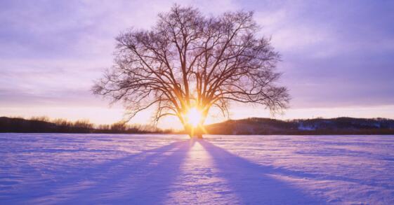 描写冬阳的唯美句子