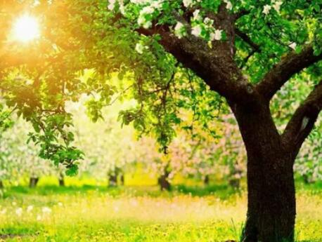 形容大树的优美句子 形容树的样子的优美句子