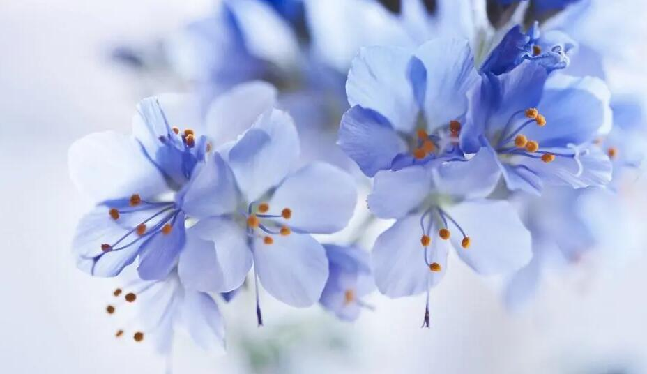 以花抒情的好句子 关于借植物抒情的句子