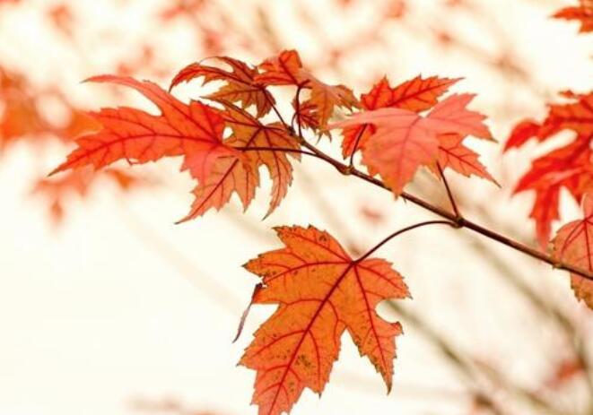 唯美带有诗意的句子 温暖的唯美诗意句子