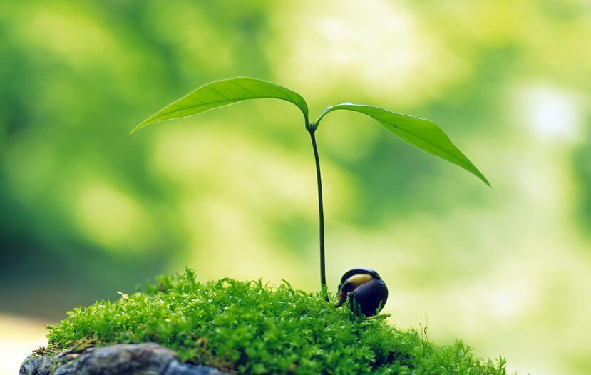 在春天的早晨借景抒情的句子 春天抒情的唯美句子