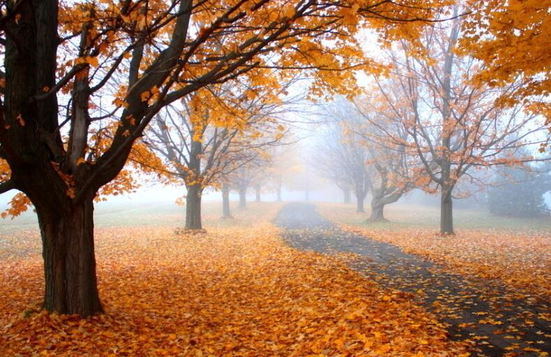 秋天祝福的唯美句子
