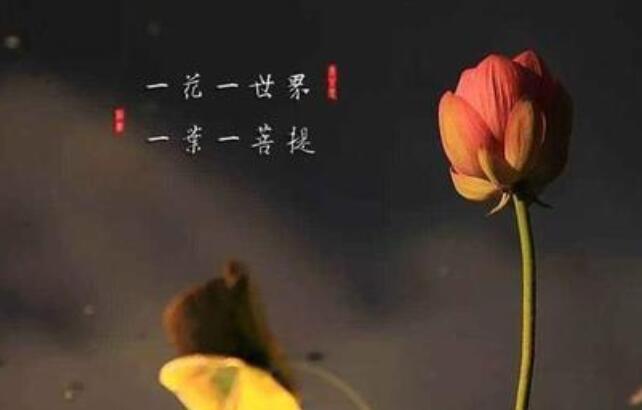 佛家表示心静的句子 让人心静的佛语禅心