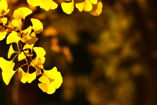 秋天思念的句子唯美  思念一个人的唯美句子