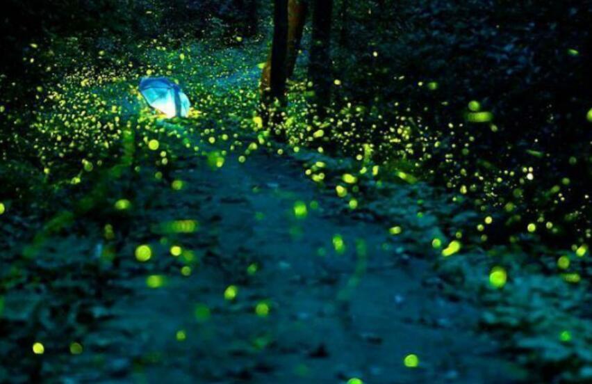 描写萤火虫的优美句子 形容夜晚萤火虫的句子