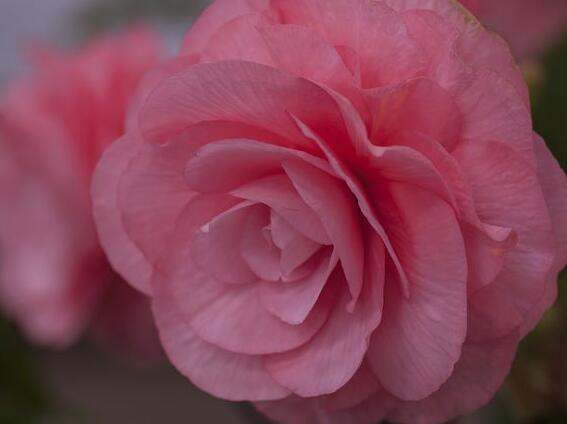 描写花的句子大全 描写花的优美句子