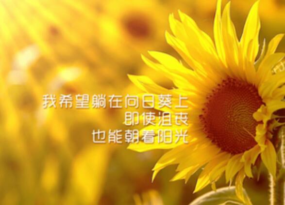 开心励志的句子 开心奋斗励志的句子