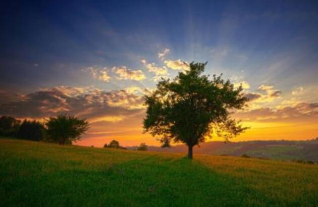 关于树的唯美句子 关于赞美树的短句