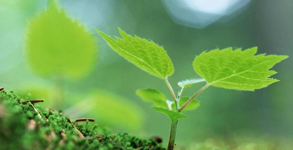 描写嫩芽的优美句子 形容植物长出嫩芽句子