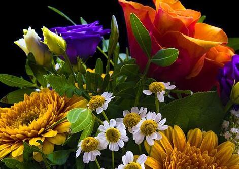 关于花的哲理句子 花的人生感悟短句