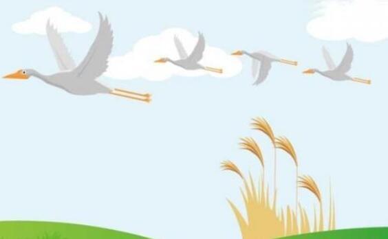描写大雁的优美句子 描写秋天大雁的句子