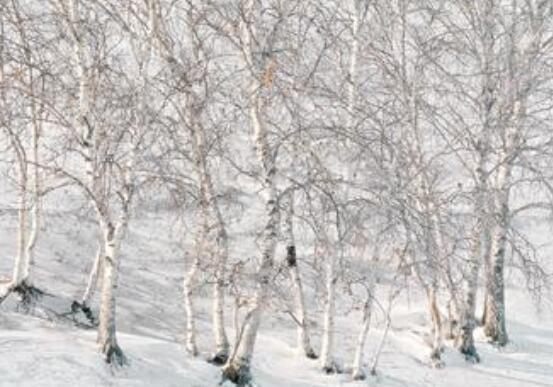 冬天伤感孤独的句子 冬天孤独的短句子