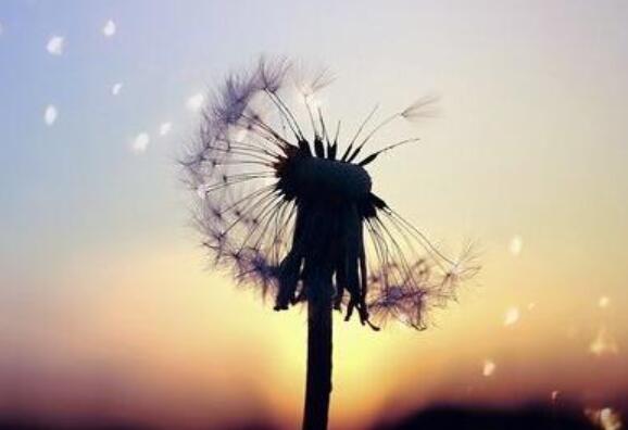 励志开心的句子 让自己开心的励志话语