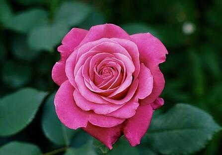 赞美花的句子短一点的 对漂亮花的赞美语