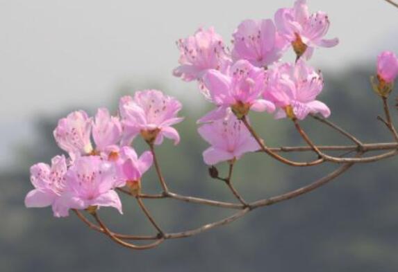 春天的诗意句子 春天有诗意的句子