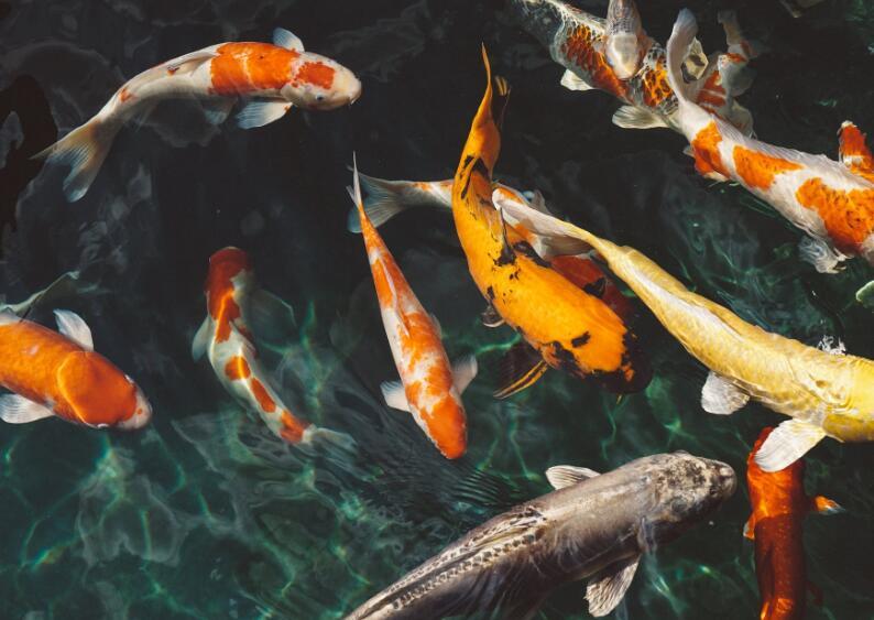 描写鱼儿的优美句子 描写鱼儿外形的优美句子