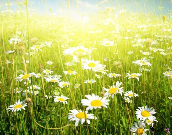 30个描写春天优美句子 描写春天的好句好段