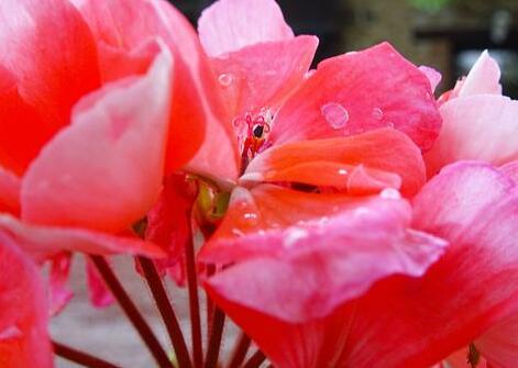 形容花的句子唯美 简单的花的描写句子
