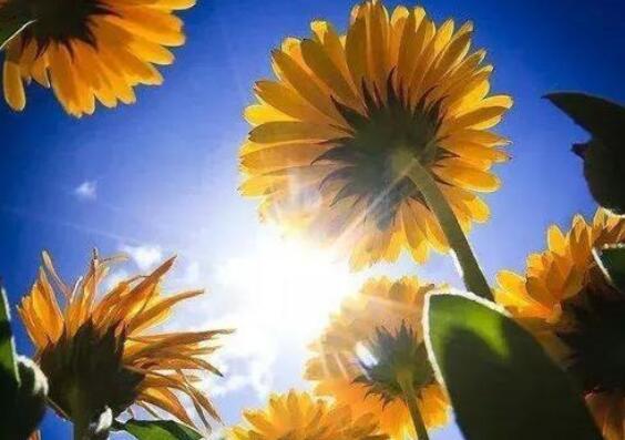充满正能量阳光的说说 积极阳光正能量的句子