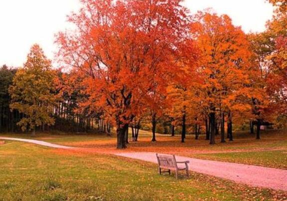 秋天的赞美句子 描写秋天景色优美句子