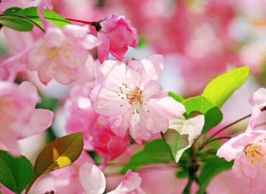 有关花的优美句子 写各种花的优美句子