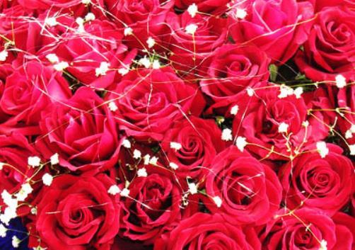 玫瑰经典句子