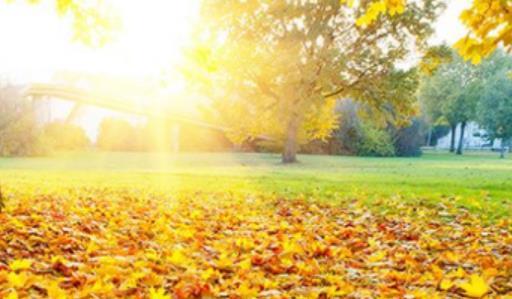 叶子掉落的唯美句子