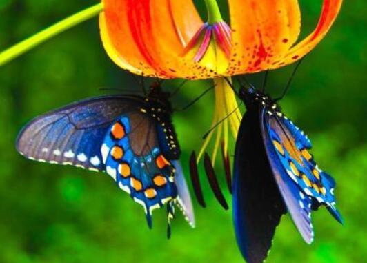 赞美蝴蝶的诗句 赞美蝴蝶的古诗词