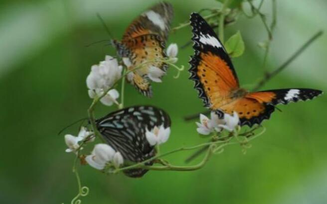 赞美蝴蝶的优美句子 描写蝴蝶外貌的句子