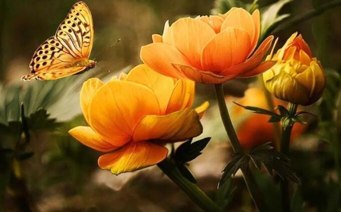 描写捉蝴蝶的优美句子 描写蝴蝶外貌的优美句子