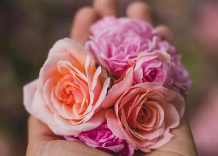 祝福新婚的语句 有文采的婚礼祝福