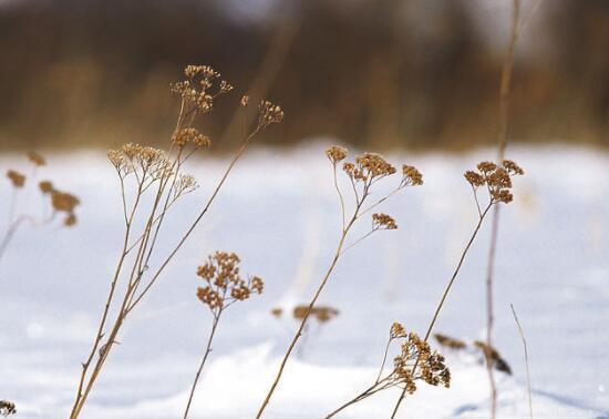 初雪禅意诗句 雪有关的诗句